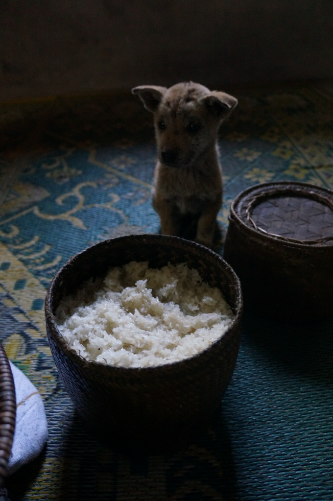 Pic of sticky rice with one of the puppies running around