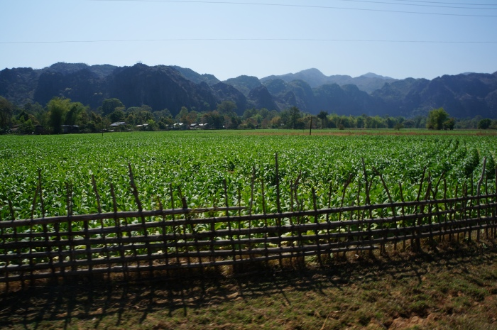 The village consisted of tobacco fields surrounded by beautiful mountains