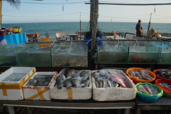 Perhaps these were the fish that made the bus trip up to Hoi An with us. I guess there is no real way of ever knowing!
