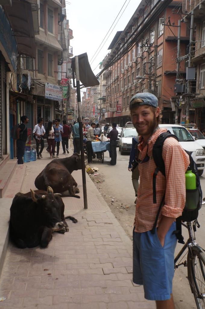 The cows control the sidewalks in Kathmandu, Nepal