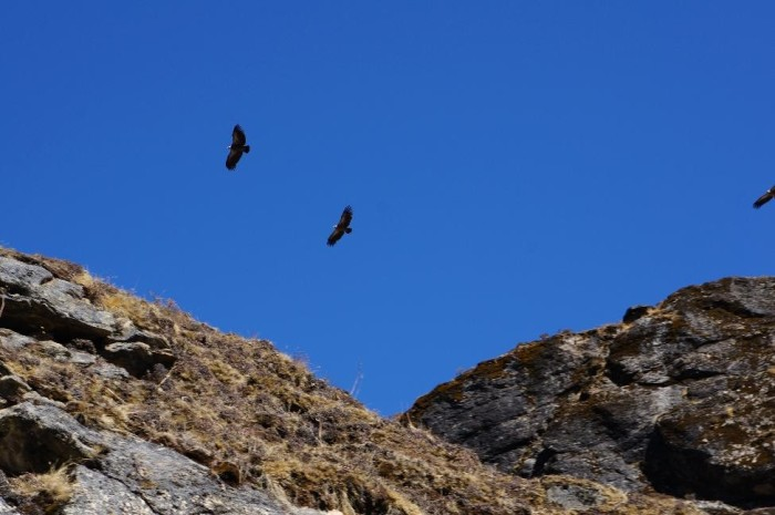 Eagles (or vultures, maybe).  Not sure but they were ubiquitous