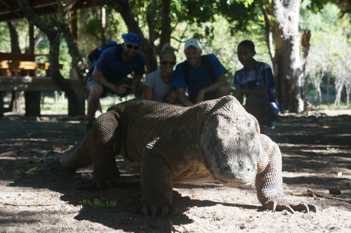 The largest Komodo dragon happens to be pretty photogenic!