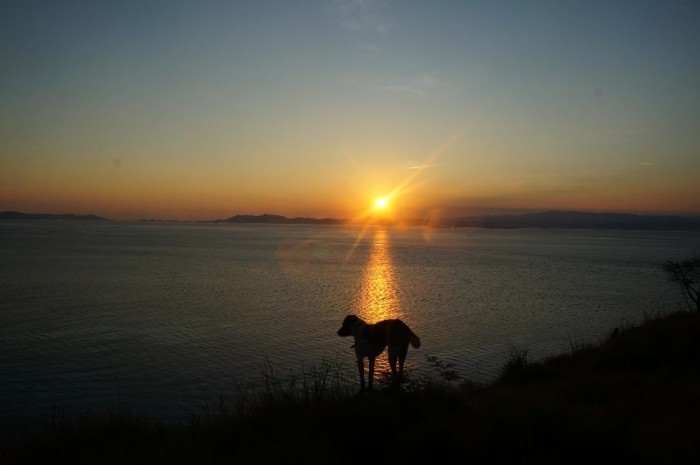 Kanawa Island's resident dog joined us for our early morning hike to the top of the hill to see the sunrise.