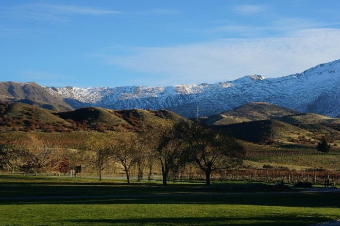 Central Otago wine country - how often do you see vineyards in front of snow-capped mountains?