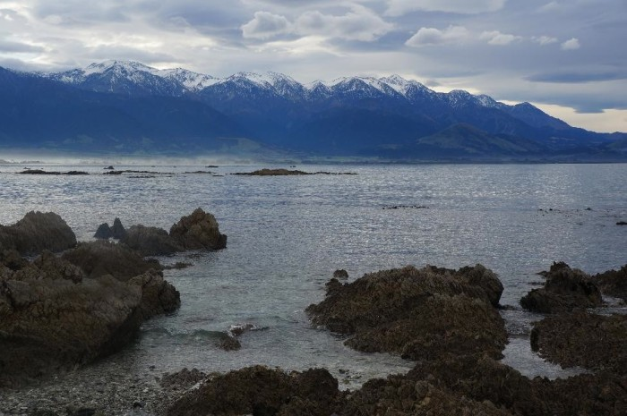 Kaikoura, a little town packed with beaches, snow-capped mountains, seal colonies, and the largest mussels you will ever see