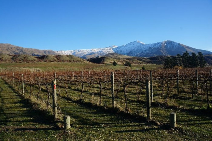 Central Otago wine country