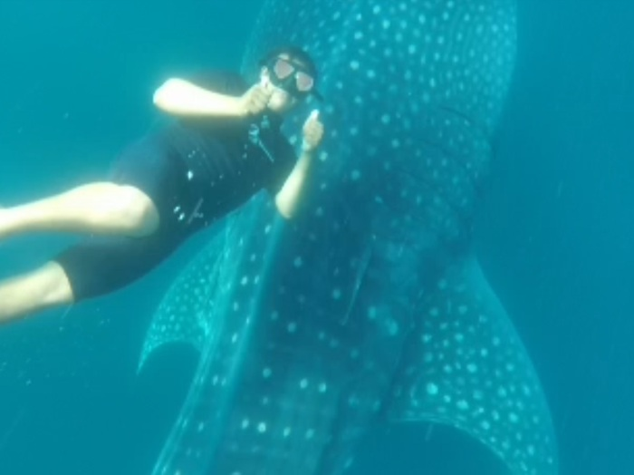 Our guide was as excited as we were to be snorkeling with the whale sharks!
