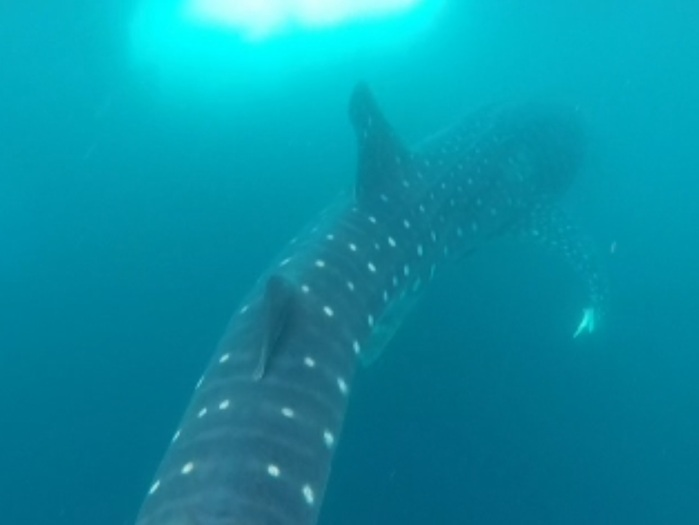 These gentle giants are beautiful!
