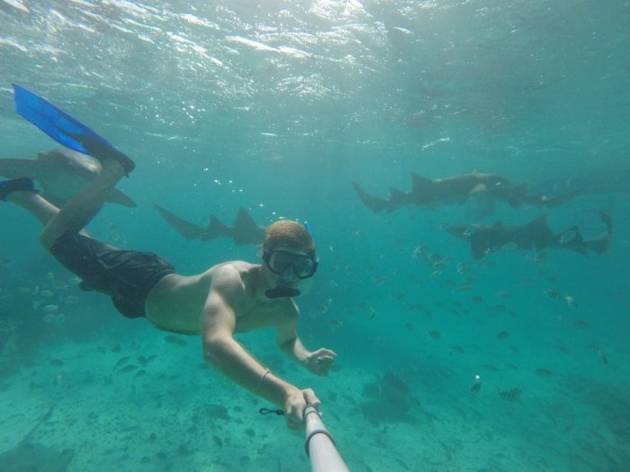 Sharks, everywhere!