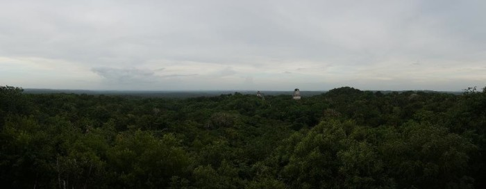 Panoramic view just before sunset from Tower 4 - you can see tower 1 and 2 jutting above the jungle canopy