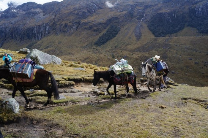 Donkeys and horses hard at work carrying our food and camping gear.