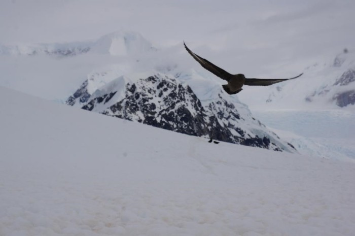 Antarctica is truly a bird lover's paradise as you can find anything from petrels to penguins to albatrosses.