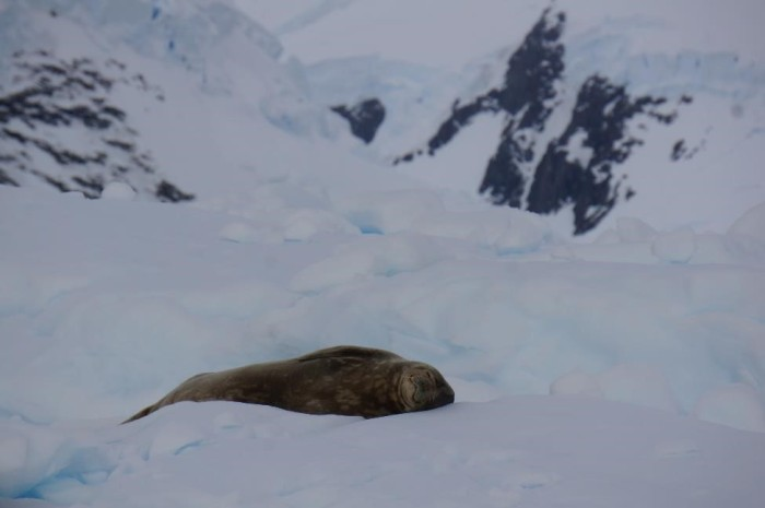 This sweet seal was peacefully napping on an iceberg.